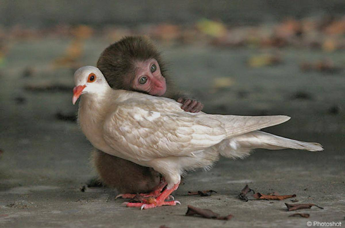 The monkey doesn't hate the bird cause it can fly, and he cannot.